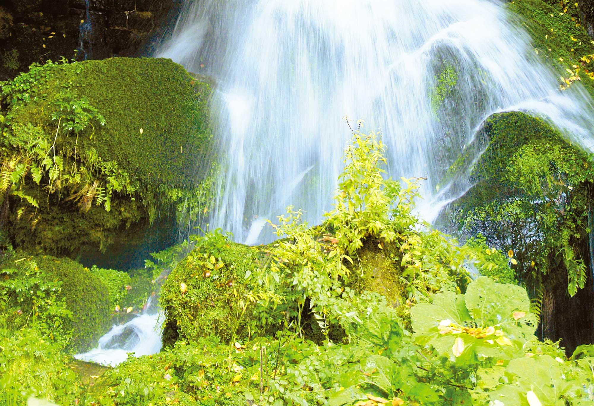 Wasserfall im frischen Grün